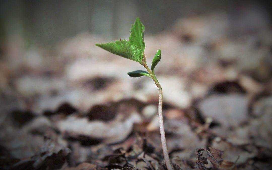 Grupo Accor já plantou mais de 20 mil árvores no Alentejo e no Algarve