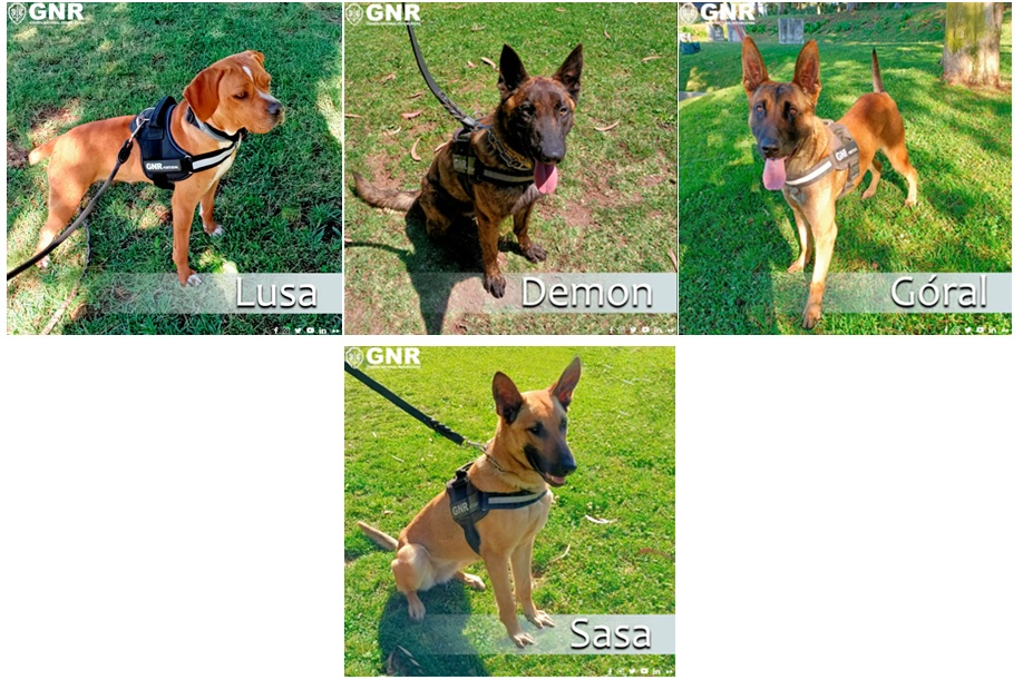 Primeiros cães de deteção de tabaco em Portugal