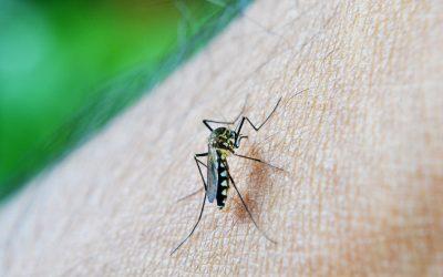 Especialista alerta para aumento de doenças transmitidas por vetores como a malária